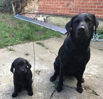 pup and big dog