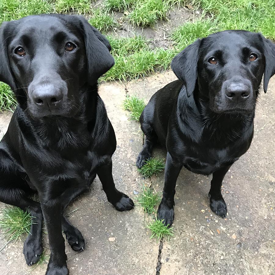 School Dogs